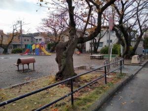 綱島西六丁目公園は幼児向け遊具がイイ!桜もかなりの名所だよ