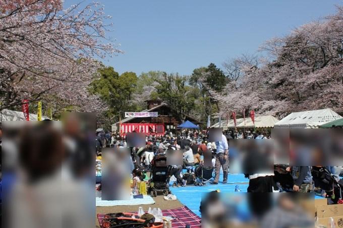 綱島桜まつり