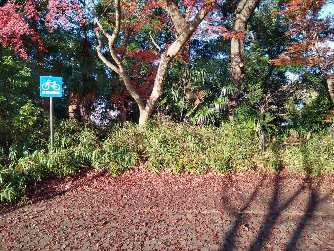 綱島公園の駐輪場