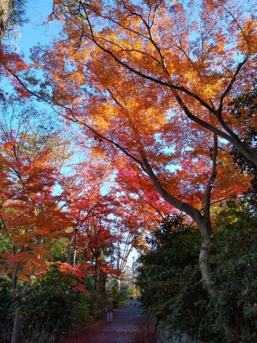 綱島公園秋の紅葉