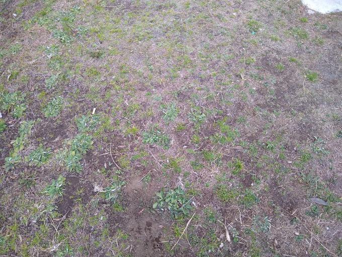 ヒコーキ公園芝生