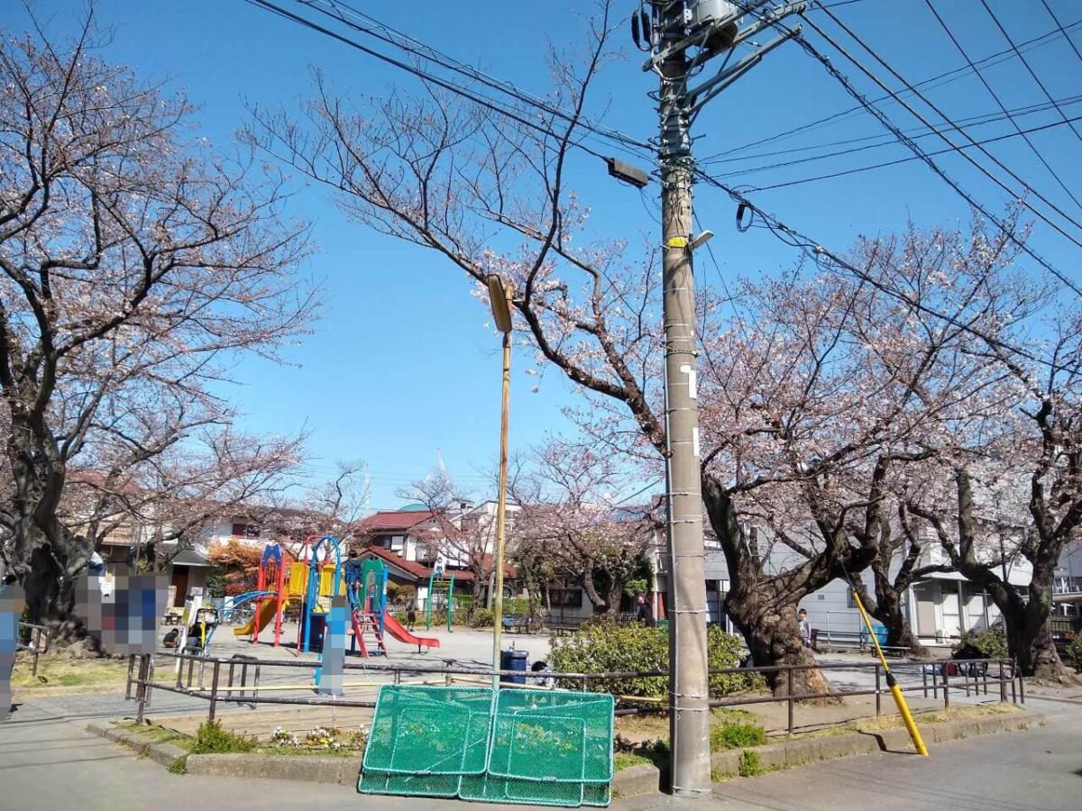綱島西六丁目公園の桜20200325