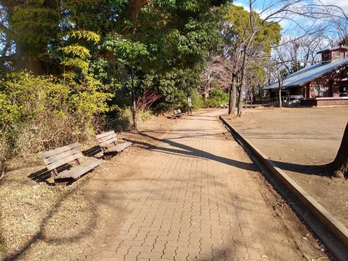 綱島公園桜の木の前のベンチ