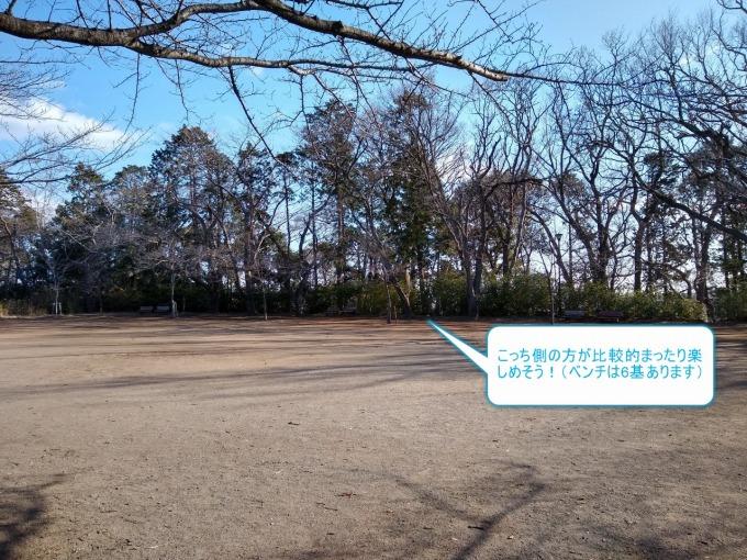綱島公園お花見デート狙い目場所