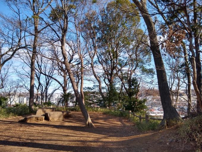 綱島公園モッキー奥の雑木林