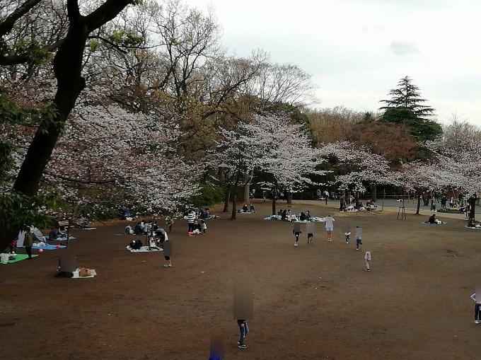 綱島公園広場奥側の桜