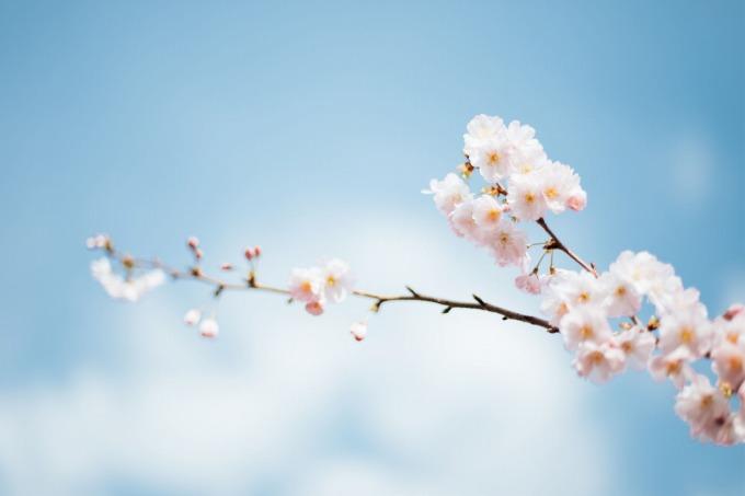 綱島徒歩圏内のお花見公園