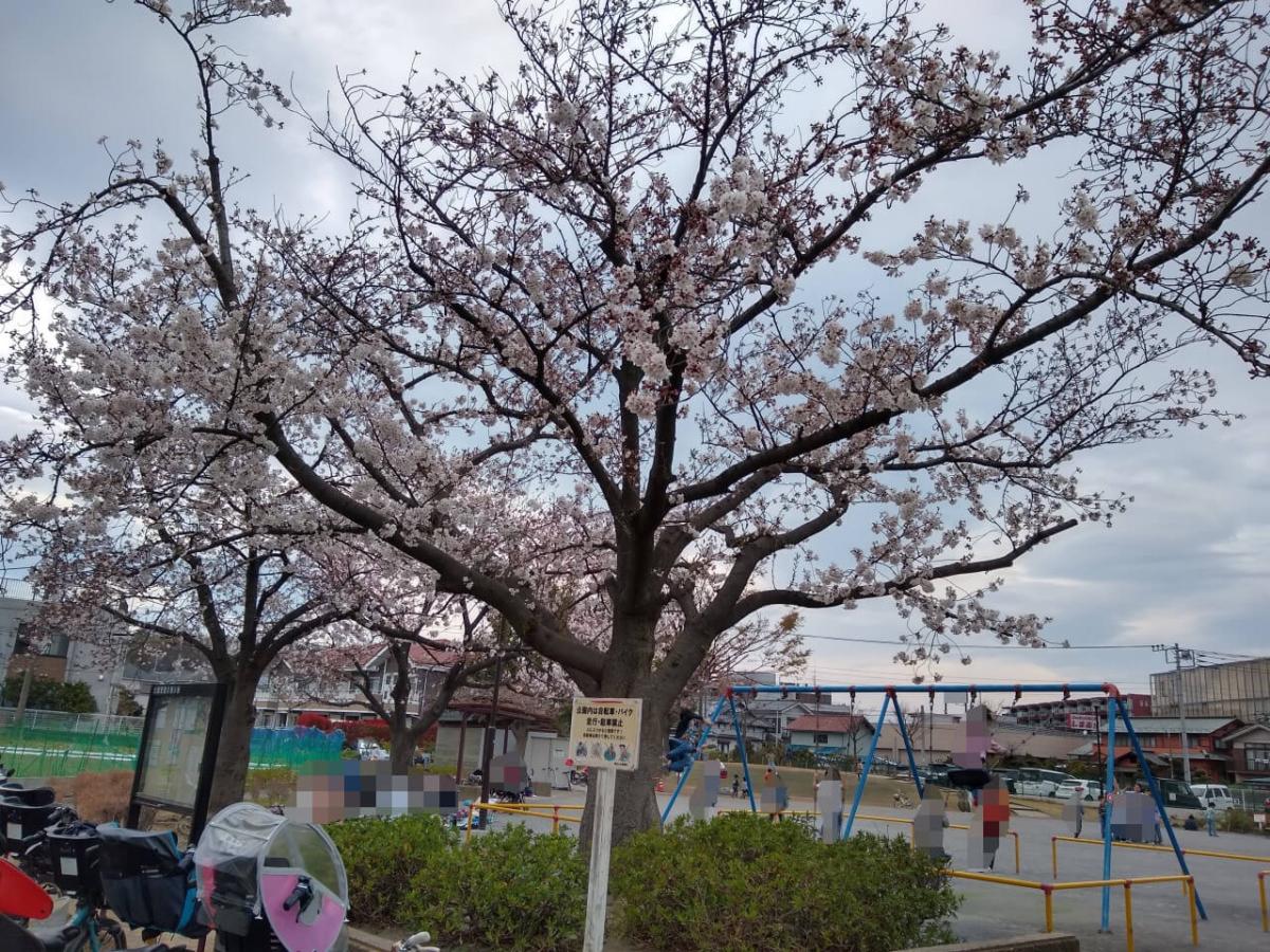 綱島東二丁目公園の桜20200327