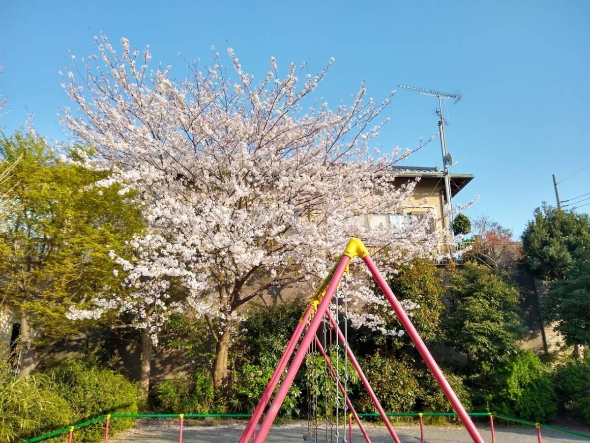 綱島西1丁目公園の桜20200404