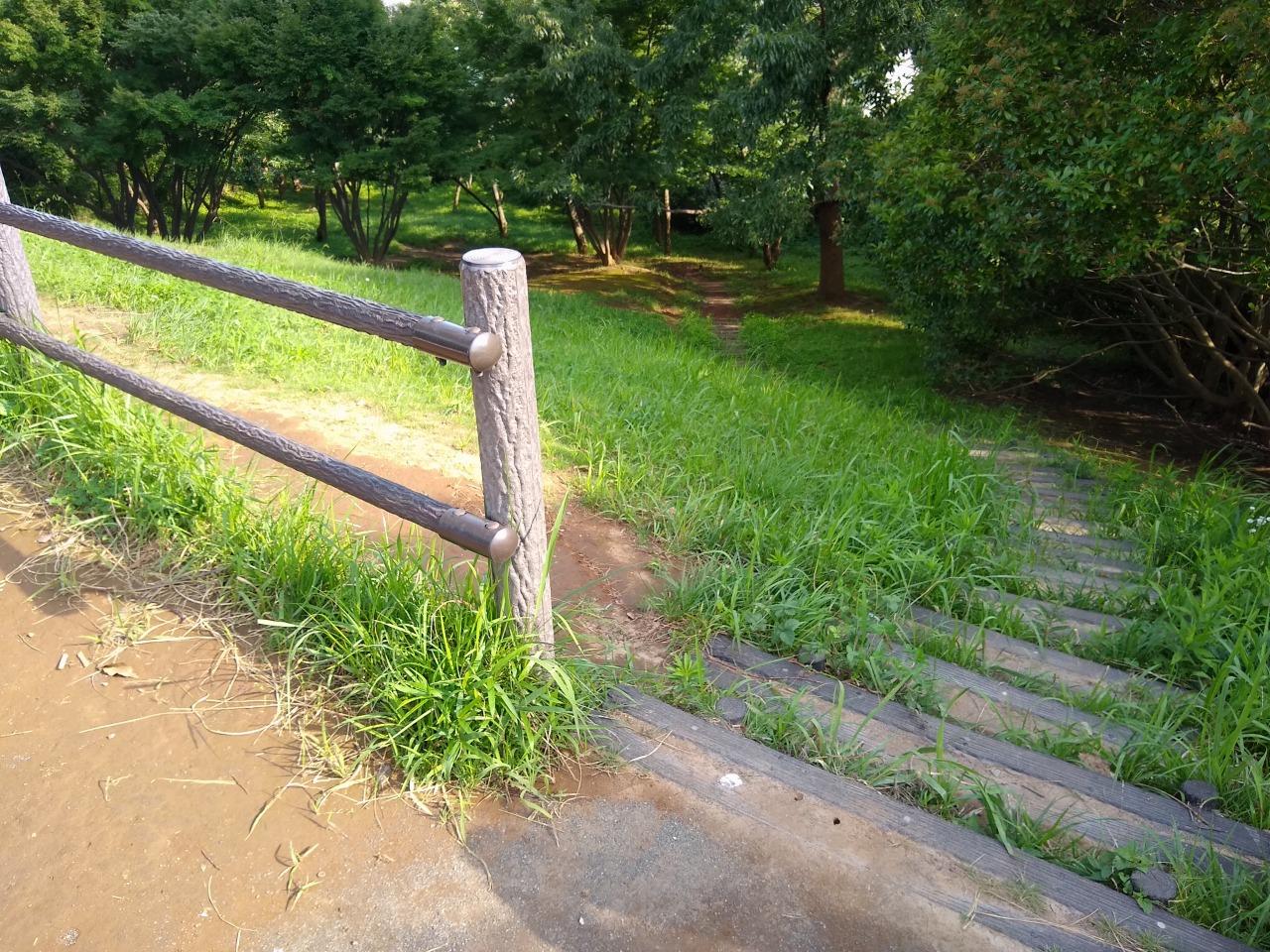 師岡町公園の自然