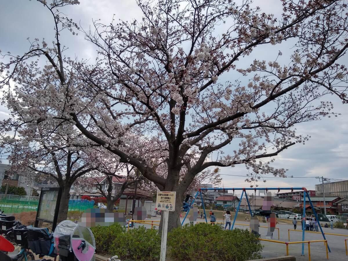 綱島東2丁目公園の桜