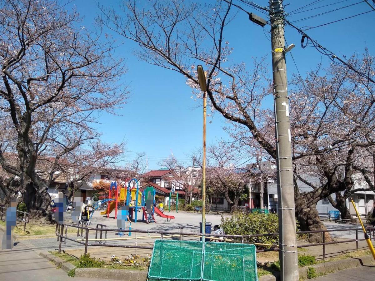 綱島西6丁目公園の桜