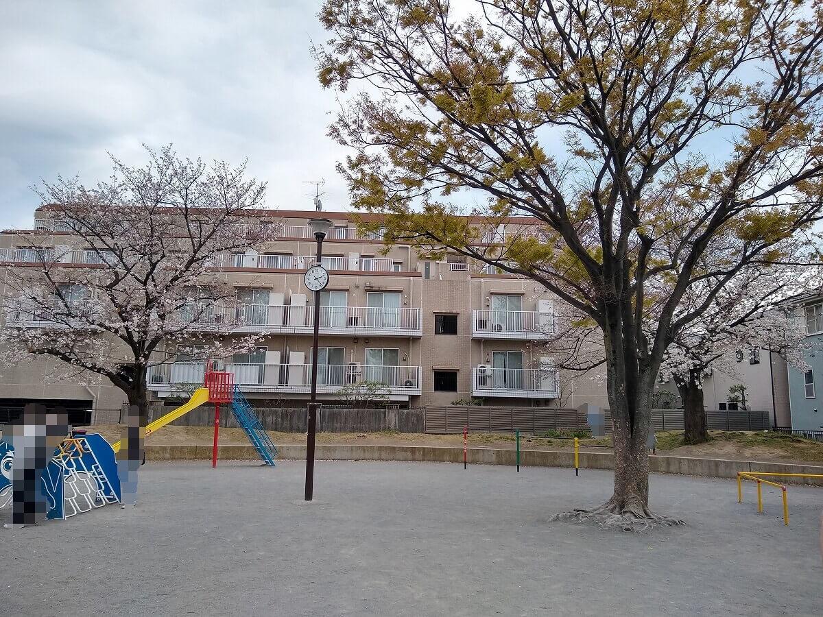 綱島東3丁目公園の桜