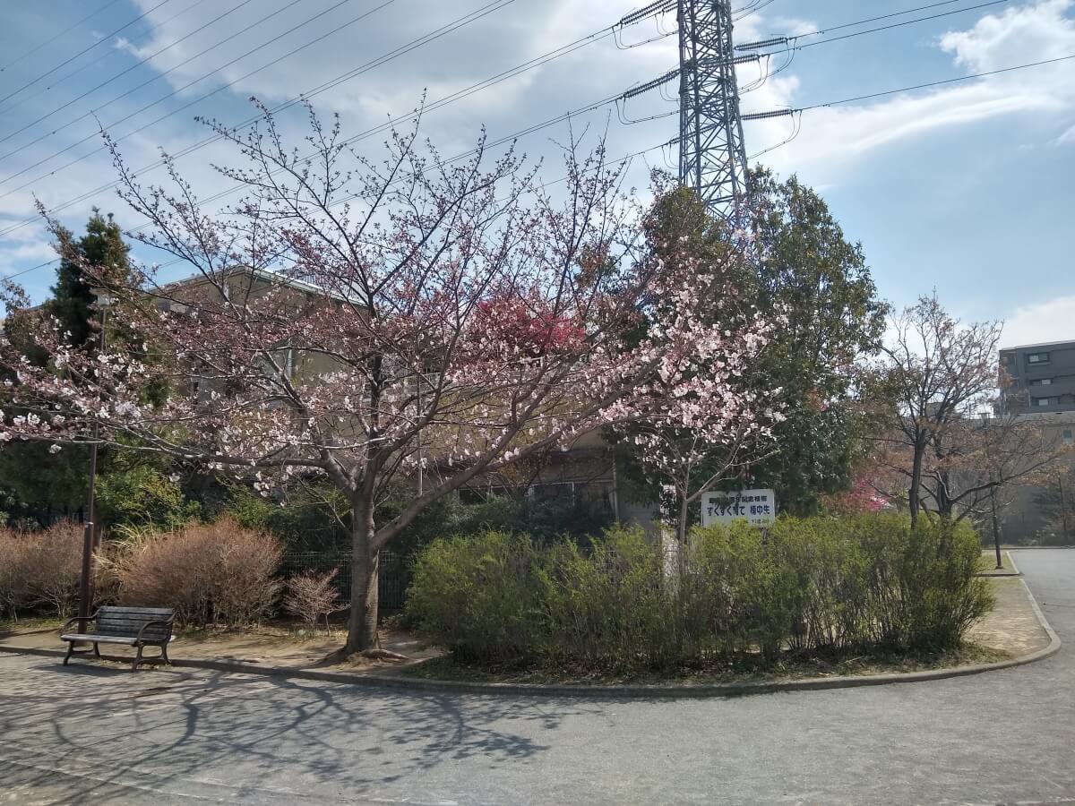 樽町しょうぶ公園の桜